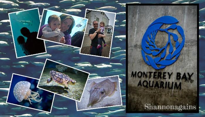 Monterey Bay Aquarium - Shannonagains